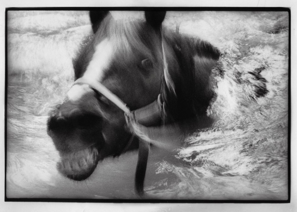 Night Mare - foto Sylvia Plachy (1980)
