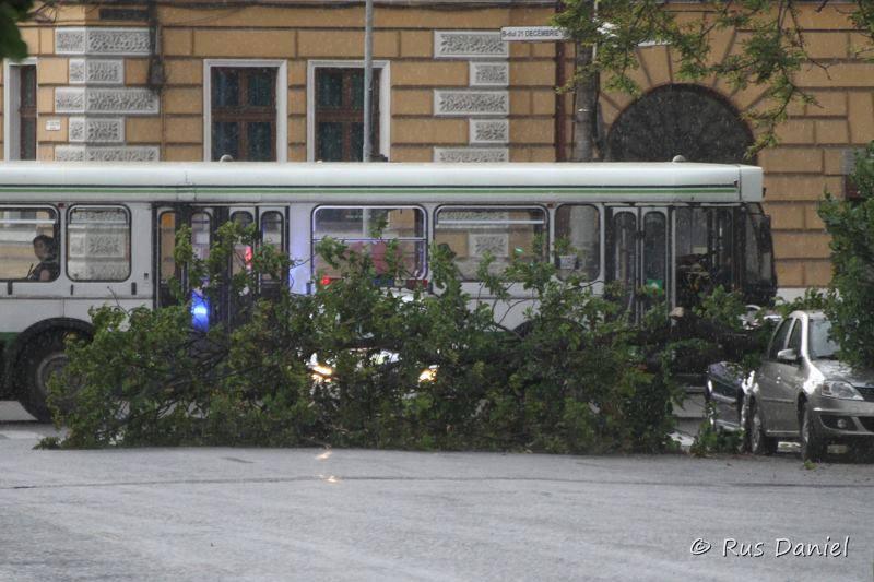sursa foto: Danie Rus-Fotografie realizata in 8 iunie 2014